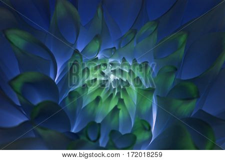 Psychedelic, hippie blue dahlia flower abstract background