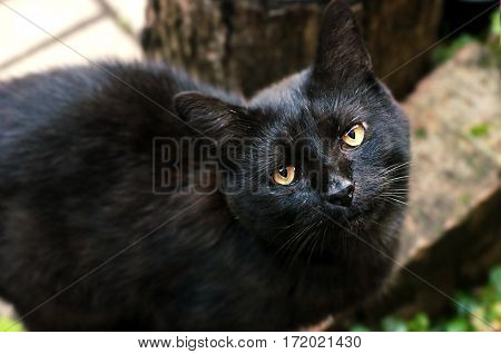 black cat looked from the bottom up with yellow eyes