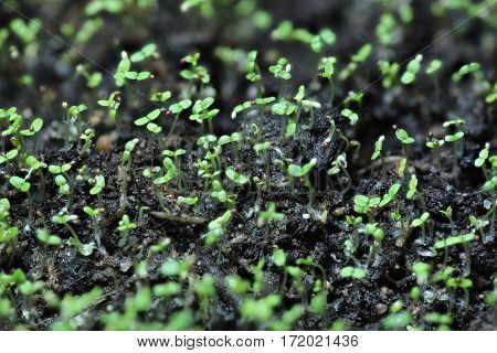 seedling green land spring sprout macro shot