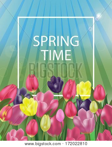 Background with colorful tulips and space for your text. Spring flowers. Vector Illustration.