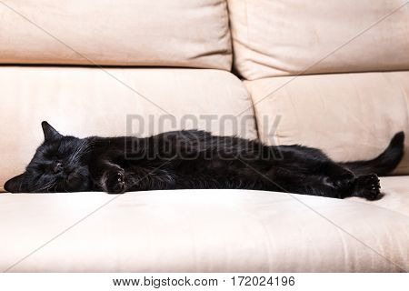 Common, european black cat with shut eyes sleeping peacefully on white sofa background. Concept of comfortable house, relaxing and safety state of mind.