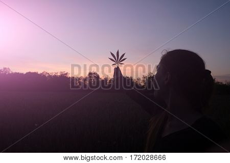 Woman with cannabis leaves in summer sunset