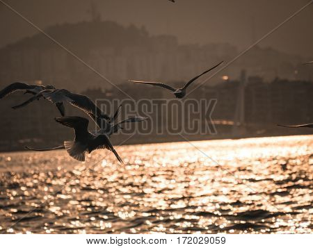 Group Of Pigeon Bird Flying By The Sea