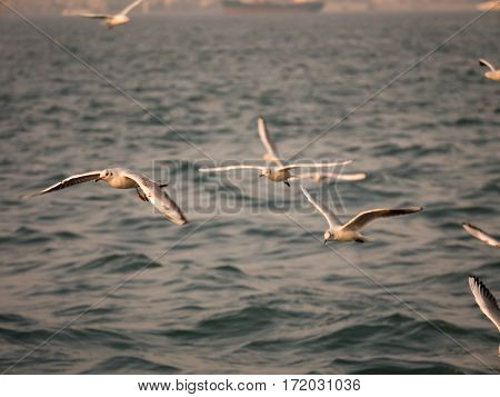 Group Of Seagull Bird Flying By The Sea