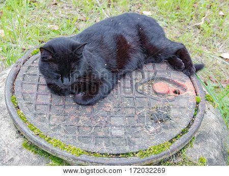 Black Cat Sleeping On A Sewer Manhole