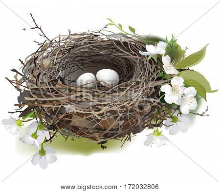 Bird's Nest. Hand drawn vector illustration of a nest with two white eggs, surrounded by spring flowers and green shoots, on white background