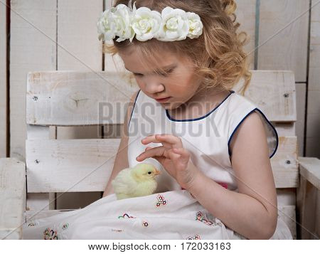 Beautiful little girl in white dress and wreath touching the fingers of a newborn chicken
