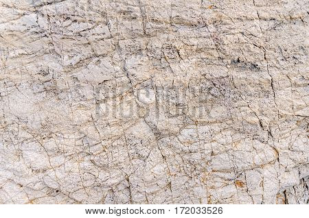 White and gray texture of sea stone texture