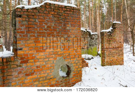 ruin of building in winter pine forest