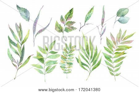 Hand Drawn Watercolor Illustration. Spring Leaves And Branches. Floral Design Elements. Perfect For