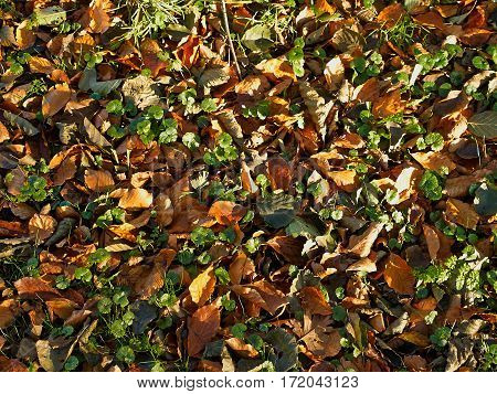 Autumn winter leaves falling on a ground great nature background image