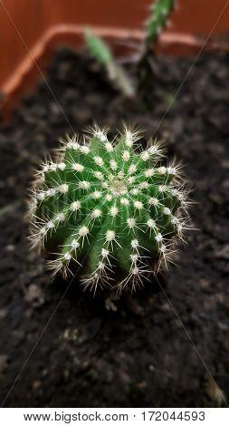 A little green cactus in a flowerpot