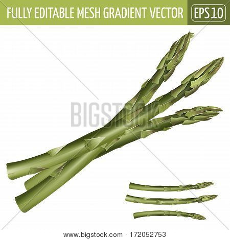 Asparagus realistic isolated illustration on white background.