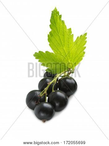 Black Currant Berries. Bunch of black currant fruits with leaf isolated on white background