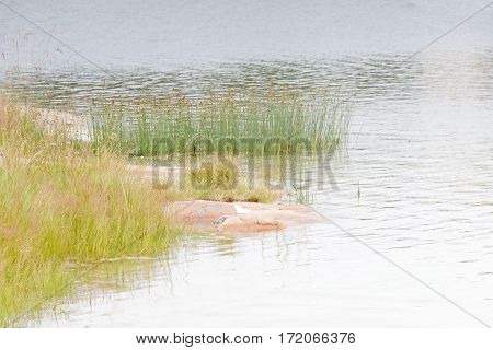 Sea and weed in the archipelago in Aaland Finland
