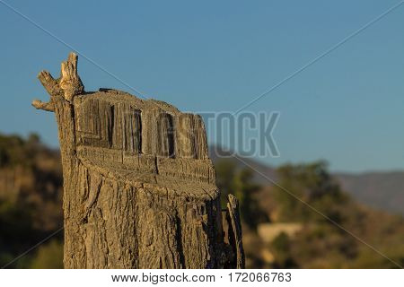 Tree stump on hillside with the mountains and sky background