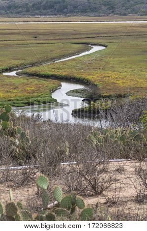 Winding tributary through a wetland with cactus in the foreground
