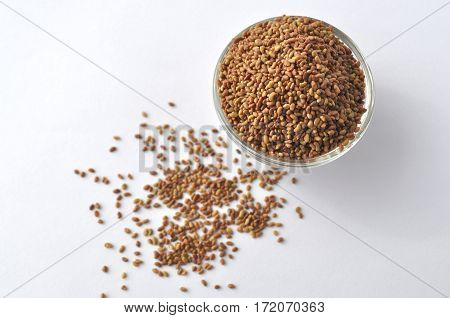 Alfalfa sprouting seeds (Medicago sativa) in a glass bowl isolated on white, top view, closeup