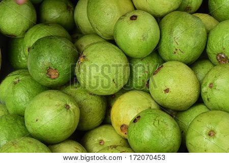 Guava (Psidium guajava) or often called guava, guava Siki and guava is a tropical plant that comes from Brazil, spread to Indonesia through Thailand. Guava has a fruit that is green with white flesh or red and sour-sweet taste. Guava fruit is known to con