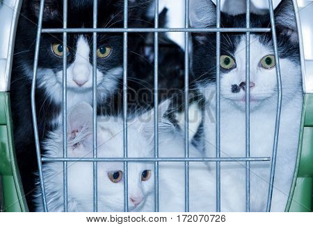 young cats in a box for transportation