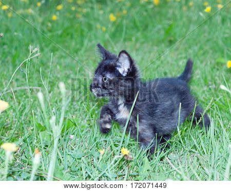 clumsy little kitten on the grass with flowers