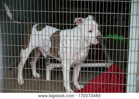 dog in jail. a sad dog in an animal pound. animal control.