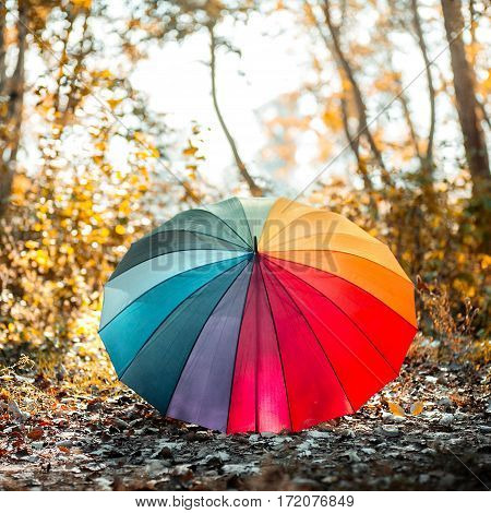 Colorful rainbow umbrella in the autumn forest landscape