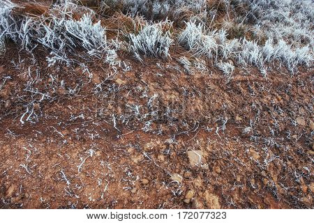 Closeup shot of frozen grass in the winter morning in the mountains. First snow. Winter landscape