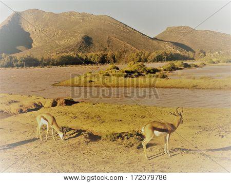Africa, Landscape, Spring Buck, Scenery, Landscape, Tows River