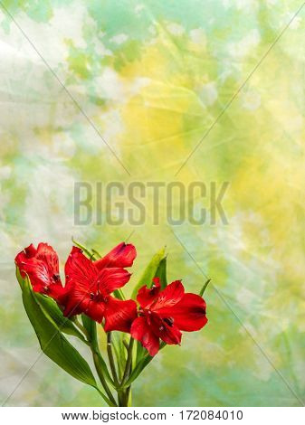Alstroemeria on yellow and green background portrait orientation