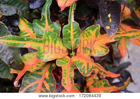 Philodendron leaf.