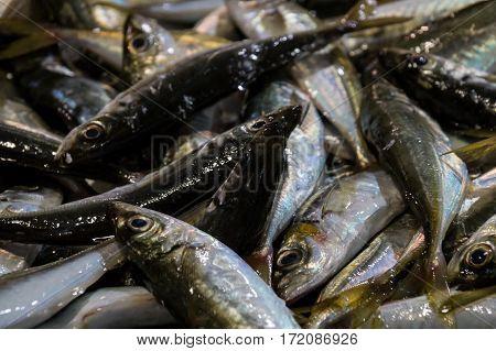 Fresh raw fish in fish market in Lagos, Portugal