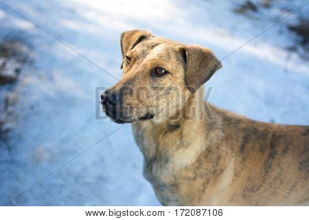 Mix breed dog standing on the snow