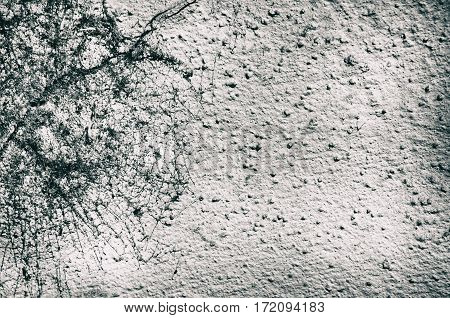 Photo of Abstract Vintage Grunge Gray Background with Spiderweb