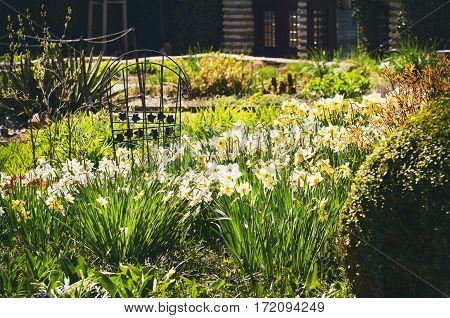 Photo of the Spring and Summer Brght Flower