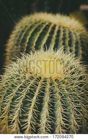 Photo of the Big Cactus Close up