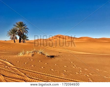 Merzouga, Morocco, February 8, 2017: At the border of the Sahara desert in Merzouga in Morocco.