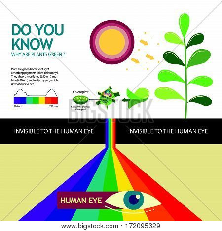 How you know why are plant green illustration design