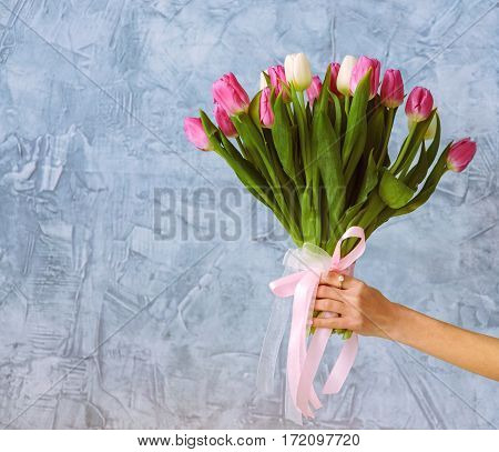 One hand with bouquet of tulips on the blue wall background