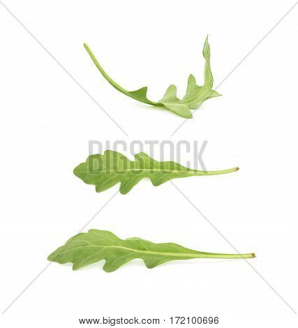 Single green rucola rocket salad leaf isolated over the white background, set of three different foreshortenings