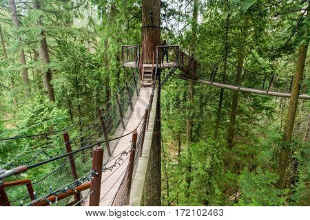 Vancouver Canada - January 28 2017: One of the many suspension walkways in the treetops at the Capilano Suspension Bridge Park Vancouver.