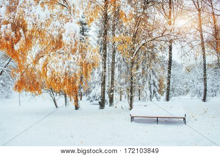 Snow-covered trees with autumn leaves and benches in the city park. Fantastic days of November. Ukraine, Europe