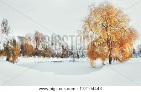 Light breaks through the autumn leaves of trees in the early days of winter. A beautiful little snow-covered lake.