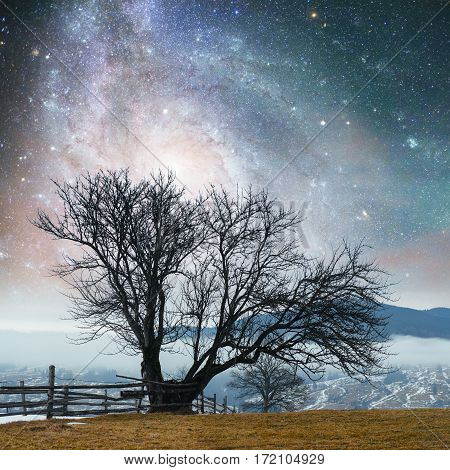 Fantastic landscape lonely tree in the early days of winter in the mountains under a starry night sky and the Milky Way. Courtesy of NASA. Carpathian, Ukraine, Europe.