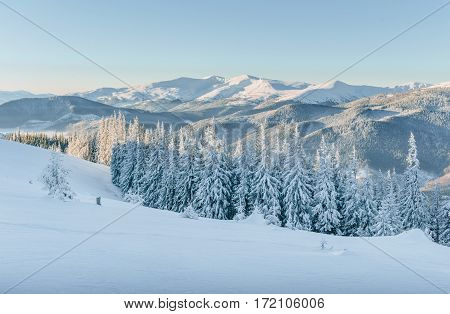 Mysterious winter landscape majestic mountains in winter. In anticipation of the holiday. Dramatic wintry scene. Happy New Year. Carpathian. Ukraine.
