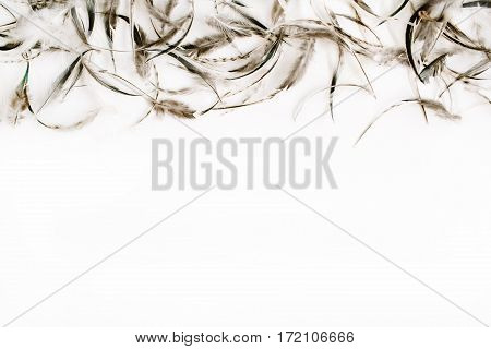 Pale bird feathers background. Flat lay top view