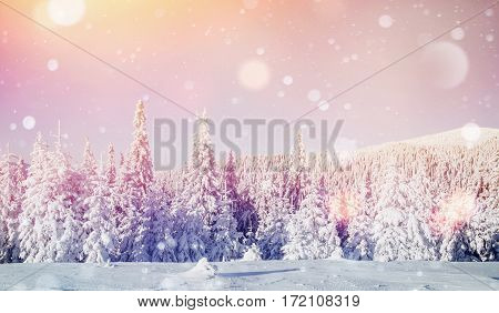 winter landscape trees in hoarfrost, background with some soft highlights and snow flakes. Carpathians, Ukraine, Europe