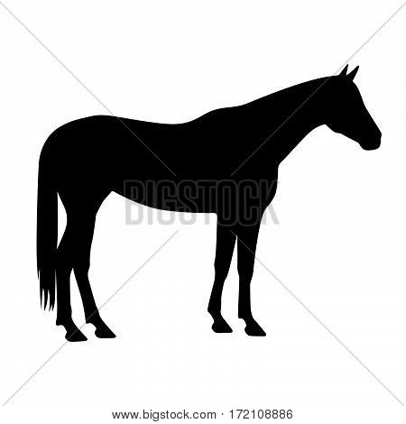 Mustang horse ( shade picture ) on white