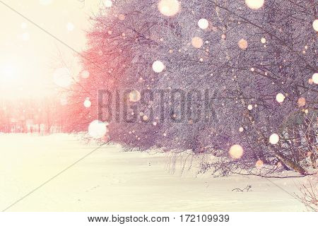 Snowfall in park. Bright winter sunrise. Beautiful winter theme. Snowflakes illuminated by rising sun.