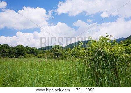 Green Meadow With Wildflowers And Blue Sky